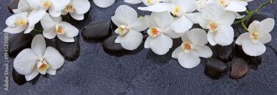 Fototapeta White orchid and black stones close up.
