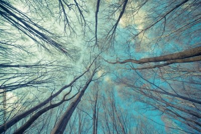 Fototapeta Trees Web Background